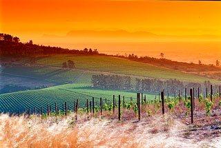 Sunset over the Saxenburg vineyards