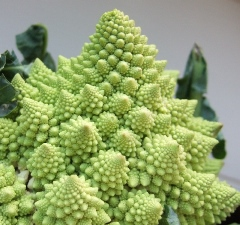 Let's get creative with cauliflower - photo courtesy of Johan Bolhuis at Stock.Xchng
