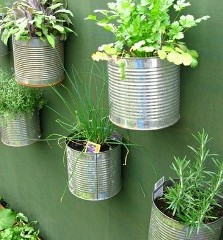 Re-using cans in your garden - photo by Terri Morris