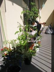 Balcony garden in the making. Photo courtesy of Carey Finn
