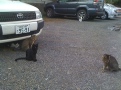 The Stray Cats, live in Shiga, Japan. Photo courtesy of Carey Finn