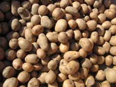 Potatoes - photo courtesy of Christa Richert at Stock.Xchng